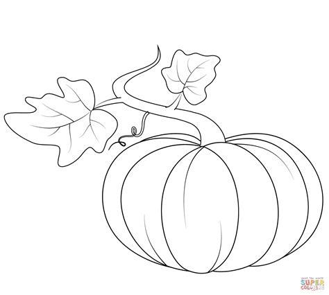 pumpkin outline coloring home