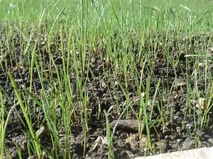 Wann Wächst Rasen : vorarbeiten f r rasen s en forum auf ~ Markanthonyermac.com Haus und Dekorationen
