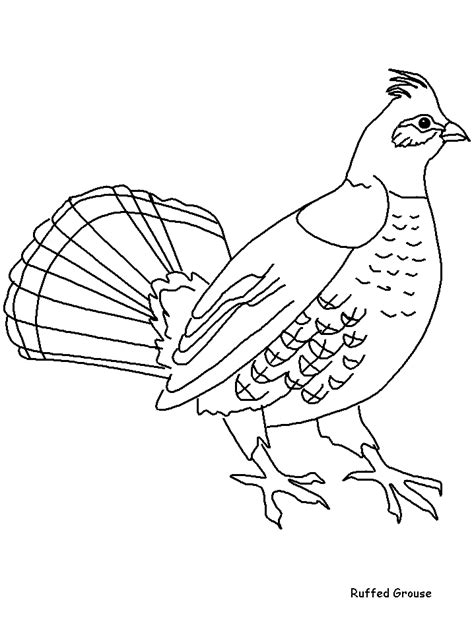 Kleurplaat Hupie ruffedgrouse animals coloring pages coloring page book