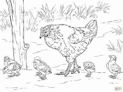 Coloring Ayam Gambar Mewarnai Anak Dan Hen