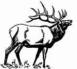 Elk Coloring Bugling 1237 1114 D6 Moose Carving Books sketch template