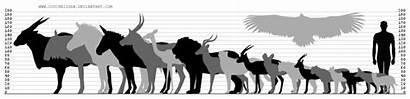 Comparison Chart African Wild Couchkissen Deviantart Favourites