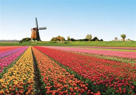 Bulbi Tulipani Quando Piantarli by I Bulbi Dei Tulipani Olandesi Come E Quando Piantarli