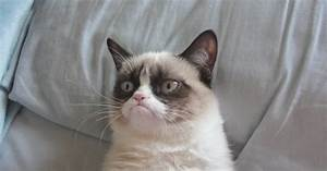 Top 5 Grumpy cat stuffed animals | StuffedParty.com | The ...