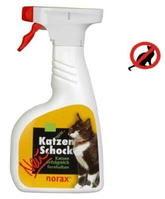katzen schreck gegen katzen