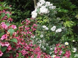 Weigela Bristol Ruby : deutzia and weigela bristol ruby grows on you ~ Michelbontemps.com Haus und Dekorationen