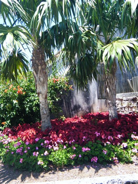 bermuda botanical gardens 56 best images about all things bermuda on