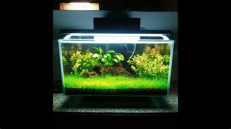 Aquascape Shrimp Tank by Fluval Edge I Shrimp Tank Aquascaping