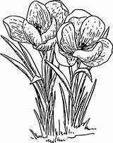 Flowers Drawing Flower Cartoon Drawings Line Outline Plant Spring Rose Plants Bulb Pixabay Garden sketch template