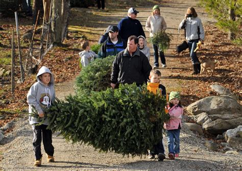 list of cut your own christmas tree farms in central mass