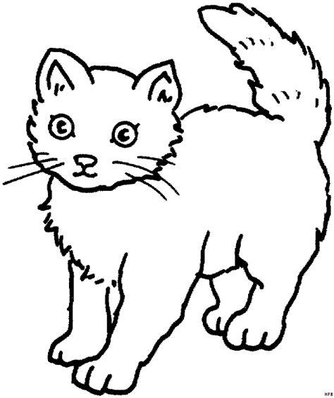 junge katze ausmalbild malvorlage tiere