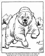 Coloring Pages Bear Grizzly Animal Zoo Printable Animals Help Raisingourkids Realistic Adult Printing Google sketch template