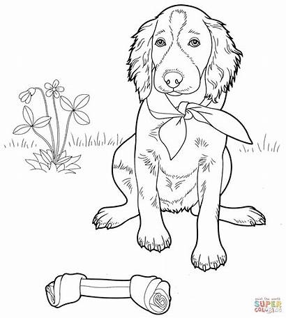 Coloring Setter Irish Pages English Supercoloring Printable