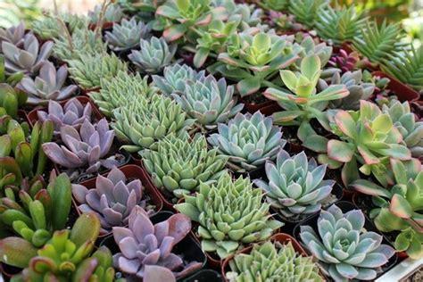 lade a led per piante vendita piante grasse piante grasse