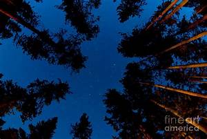 Pine Tree Forest At Night Photograph by Lane Erickson