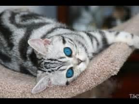 los gatos and cat los gatos bellos los gatos hermosos the most