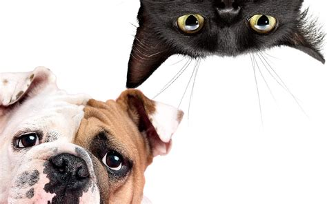 Your Pet Explained The Truth About Cats And Dogs
