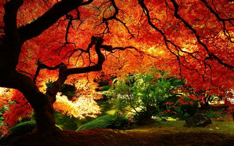 Autumn 4k Uhd Wallpapers by Summer Or Autumn Hd Nature Wallpaper