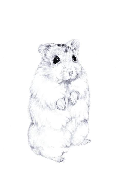 hamster drawing google search artistic animal