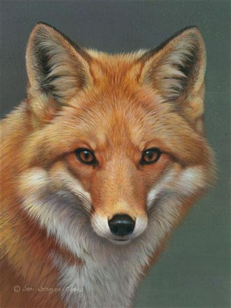 best fox pictures best 300 foxes drawings and paintings of fox images on fox drawing fox painting