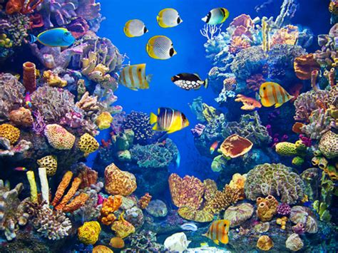 puzzle aquarium swimming in the sea of social how one stopped