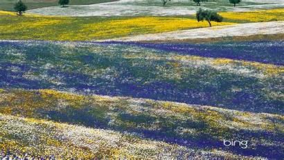 Bing Alentejo Portugal Landscapes Meadows February Wallpapers