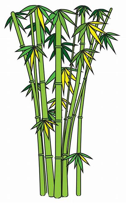 Bamboo Draw Clip Drawing Tree Clipart Cliparts