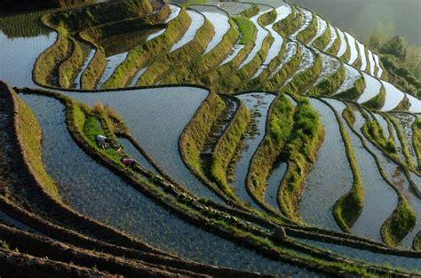 la cuisine pour les nuls photo rizière en terrasse photos chine informations