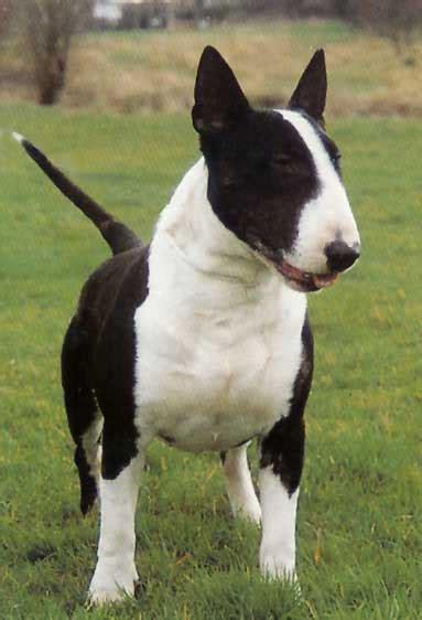 razas de perros perros prohibidos en buenos aires