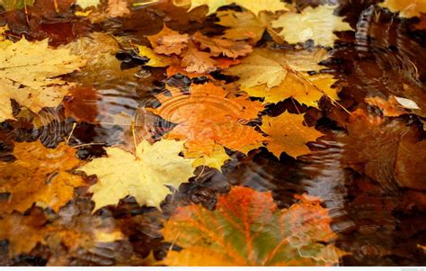 Fall Wallpaper For by Free Fall Wallpaper For Gallery