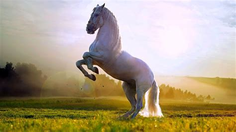 sorry images pictures wallpapers for beautiful white horse standing up wallpaper hd 1080p for desktop horses pinterest white