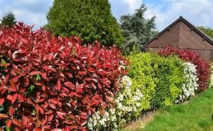 Haie Haute Et Rapide : planter une haie d 39 arbustes choisir des arbustes persistants fleuris ou panach s ~ Dode.kayakingforconservation.com Idées de Décoration