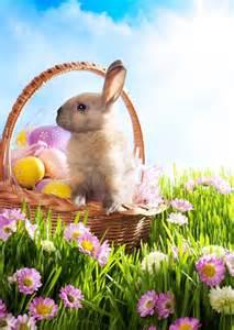 easter bunny origin proflowers