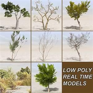 tree plants afghanistan 3d model