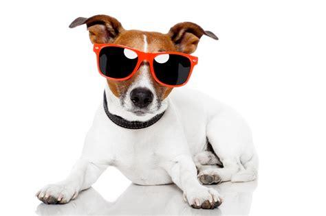 gadstonech sonnenbrille fuer hunde
