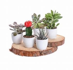 Entretien Plantes Grasses : plantes grasses succulentes jardin dion ~ Melissatoandfro.com Idées de Décoration