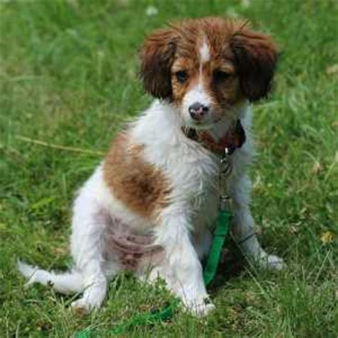 small dog breed list     pictures descriptions