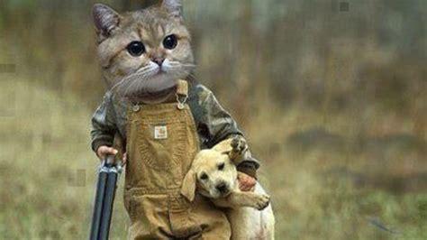 gatos  perros los  mas divertidos del mundo youtube