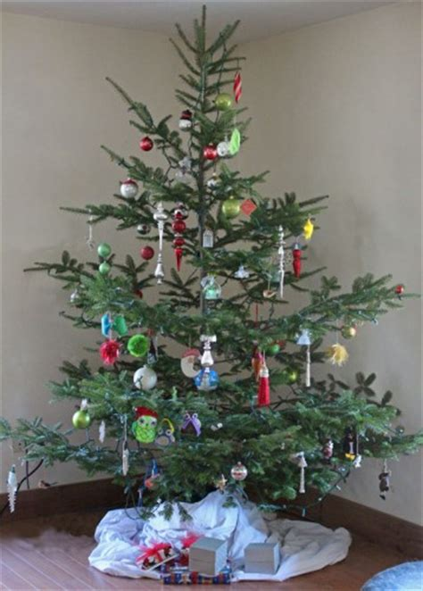 best kind of christmas tree to buy our free range organic tree downeast thunder farm