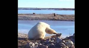 ¡Aww! Mira a este tierno oso polar acariciar un perro FMDOS