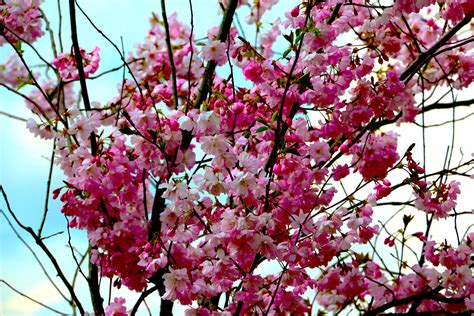 Free Images : tree branch flower petal spring produce