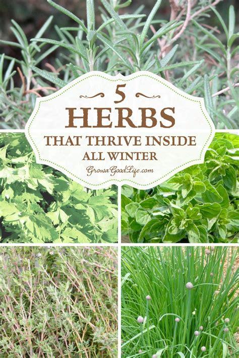 grow herbs indoors 5 herbs that thrive inside