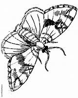 Moth Coloring Pages Jungle Room Drawing Google Coloringpages4kids Colouring sketch template