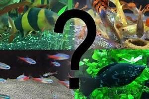 Aquarium Fische Süßwasser Liste : aquarium fische bersicht ber die wichtigsten arten ~ Watch28wear.com Haus und Dekorationen