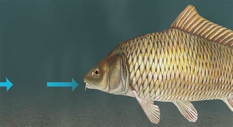 Kako dišu ribe? - 3D scene - Mozaik digitalno obrazovanje ...