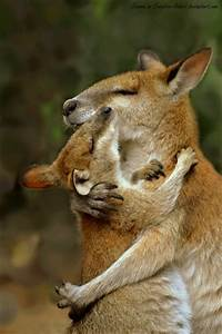 Mother and Baby Wallaby Hug by Creative-Addict on DeviantArt