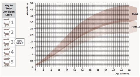 Gewicht foetus per week