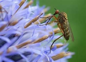 Was Essen Mücken : fressen kugeldistel forum f r naturfotografen ~ Frokenaadalensverden.com Haus und Dekorationen
