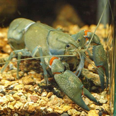 newsroom  rules  fight invasive species