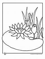 Lily Coloring Water Flower Pages Pad Lilies Frog Flowers Drawing Line Print Cartoon Clipart Pads Printable Colouring Drawings Jr Pond sketch template